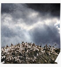 The Rock of Birds. Poster