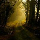 Fox & Pin Lane,Spring,Bury St Edmunds by Suffolk Photography