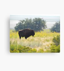 Buffalo Sunflowers Canvas Print