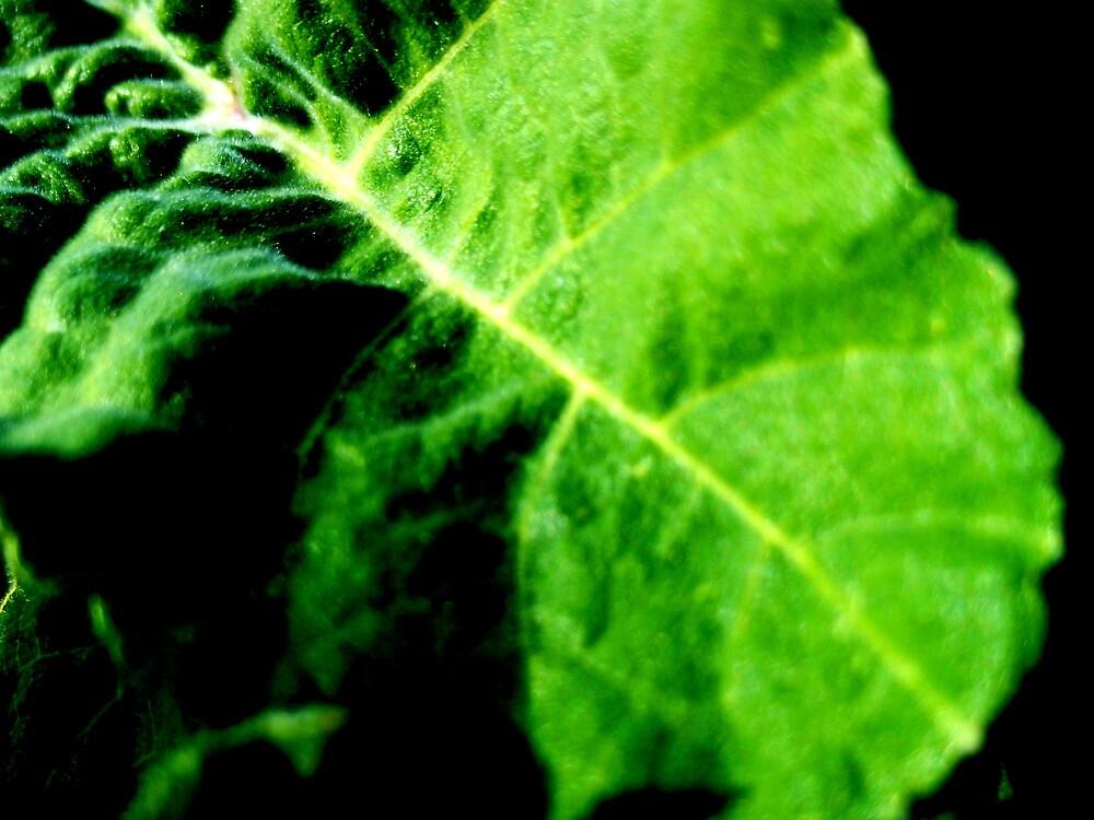 a leaf  by Ryanpk