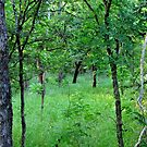 Deep in the Woods by aprilann