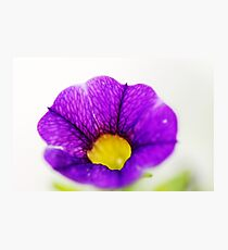 In my garden: a violet flower Photographic Print