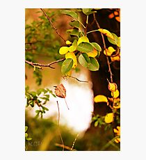 Leaf fall Photographic Print