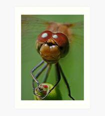 Dragonfly Smile Art Print