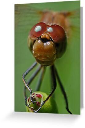 Dragonfly Smile by George Crawford