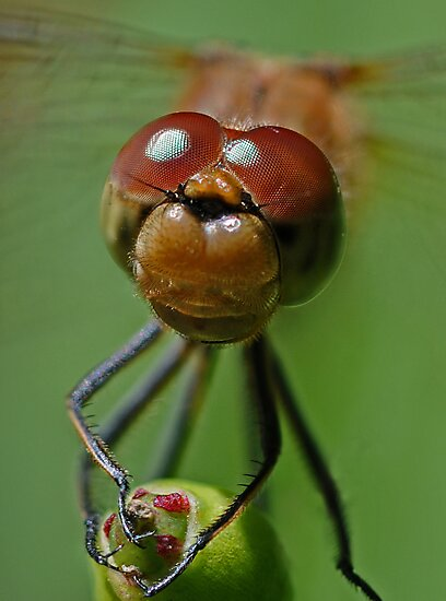 Dragonfly Smile by George Crawford
