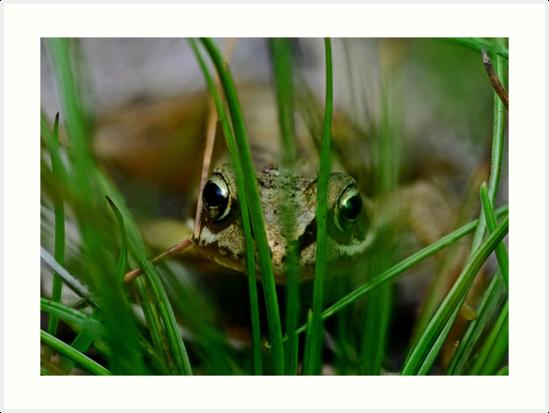 Froglet Keeking by George Crawford