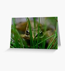 Froglet Keeking Greeting Card