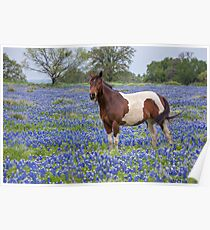 Horse in Texas Bluebonnets Poster
