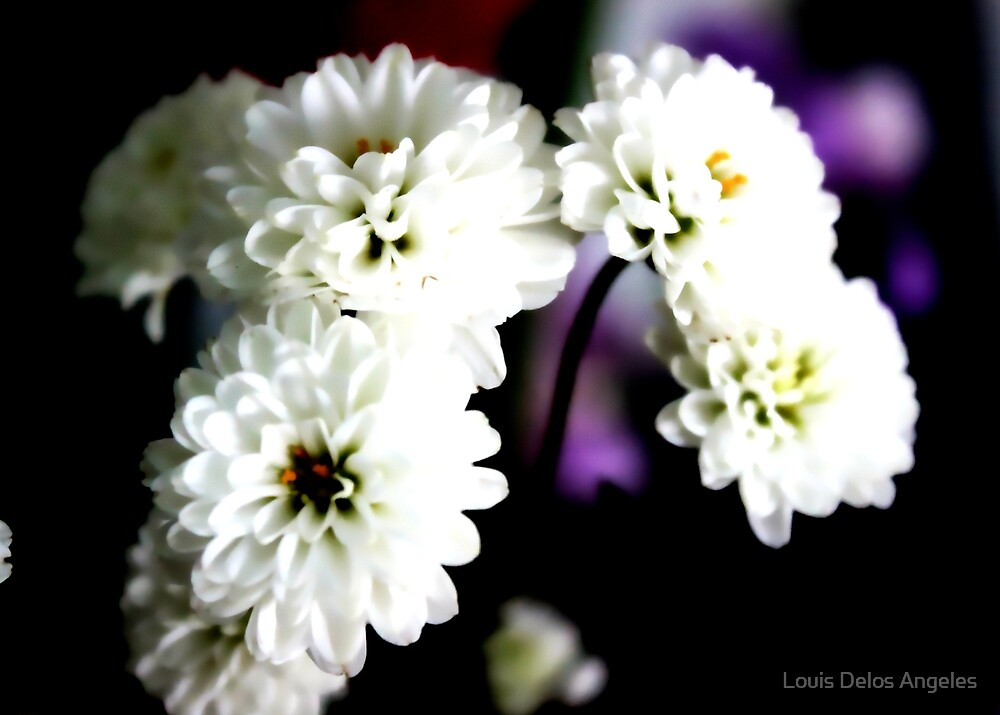 White flowers for valentines by Louis Delos Angeles