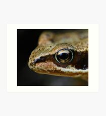 Froglet's Eye Art Print