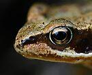 Froglet's Eye by George Crawford
