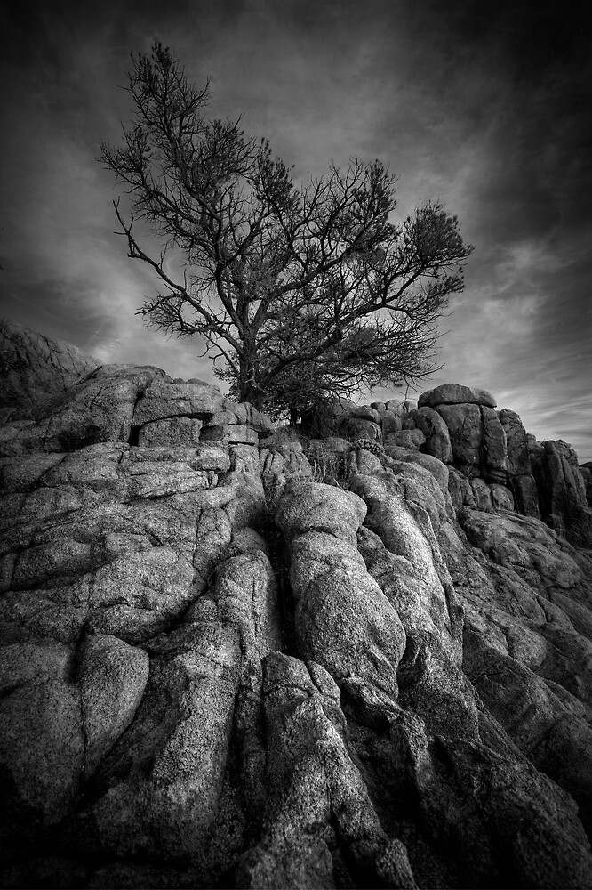 Reach-Black and White by Bob Larson