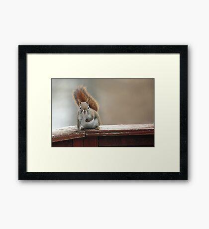 """""""Anybody Home ?"""" Framed Print"""