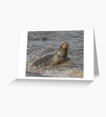 Atlantic Grey Seal Greeting Card