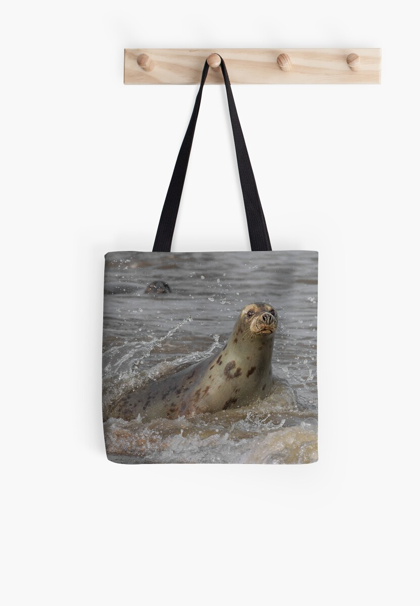 Atlantic Grey Seal by Patricia Jacobs DPAGB LRPS BPE4