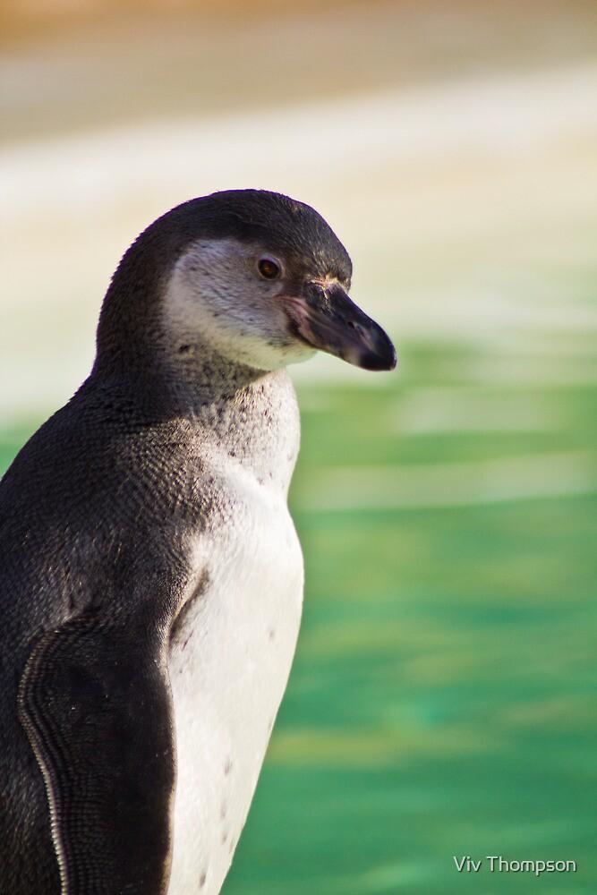 Portrait of a Penguin by vivsworld