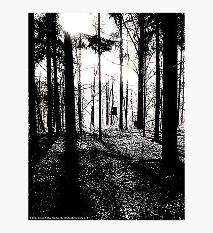 Deer stands in the woods VRS2 Photographic Print