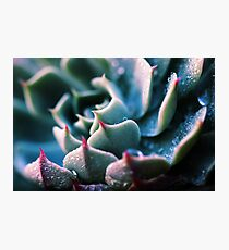 There's Glory in the Little Things Photographic Print