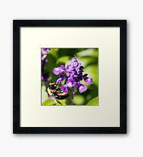 Bee 6 Framed Print
