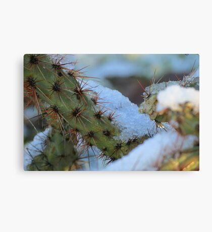 Chilled Prickly Pear Cacti Canvas Print