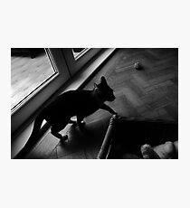 Skulk Photographic Print