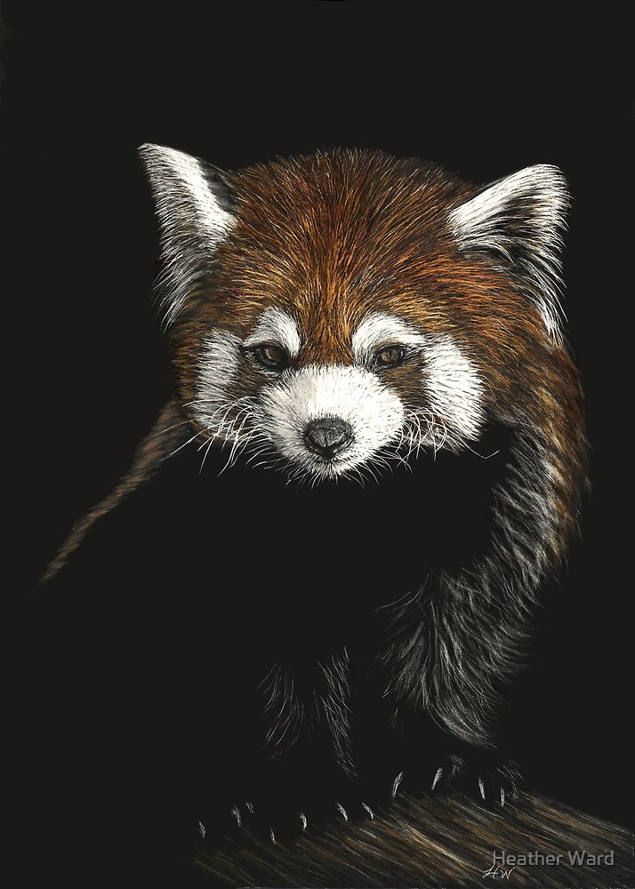 Huggable - red panda by Heather Ward