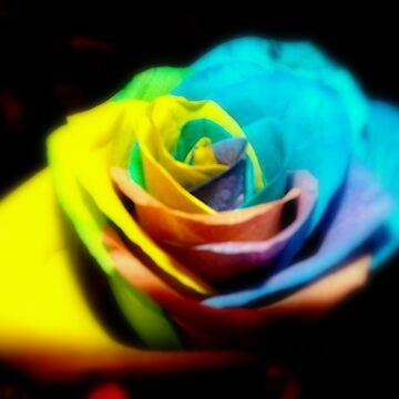 Multicoloured Rose by MollieKnight