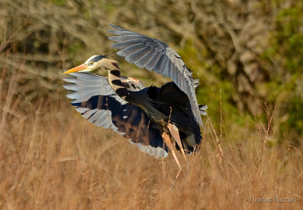 Flying Above the Grass by TJ Baccari Photography