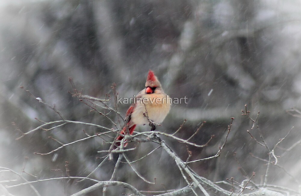 Female Cardinal in the Snow by karineverhart