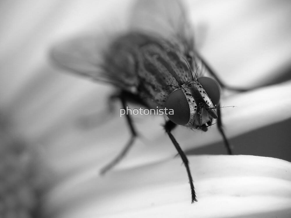 Fly 1 B&W by photonista