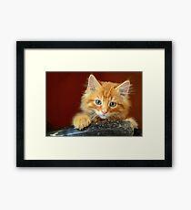 Ginger Kitten Framed Print