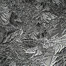 Frost 1 B&W by photonista