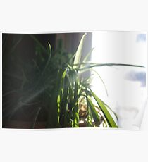 Plant in front of Kitchen Window Poster