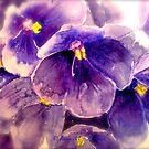 Violets... by ©Janis Zroback