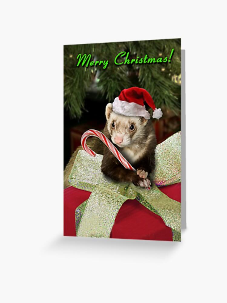 Christmas Ferret.Christmas Ferret Greeting Card