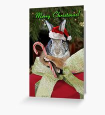 Christmas Bunny Rabbit Greeting Card