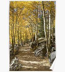 Aspen Tree Path, Rocky Mountain National Park, Colorado Poster