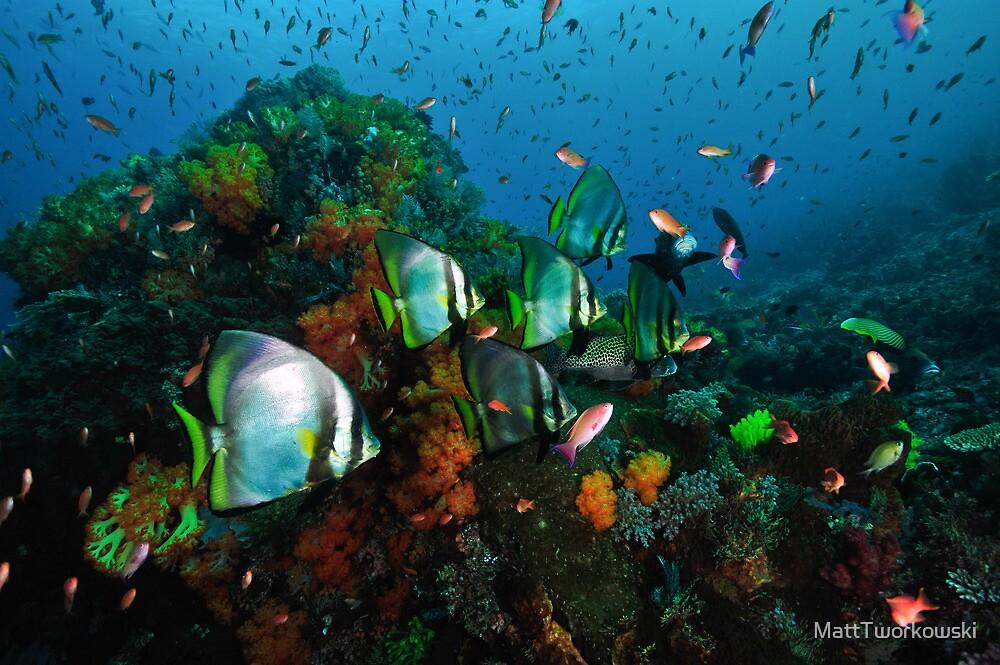 Fishy by MattTworkowski