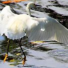 Great Egret - Landing Gear by Laurel Talabere