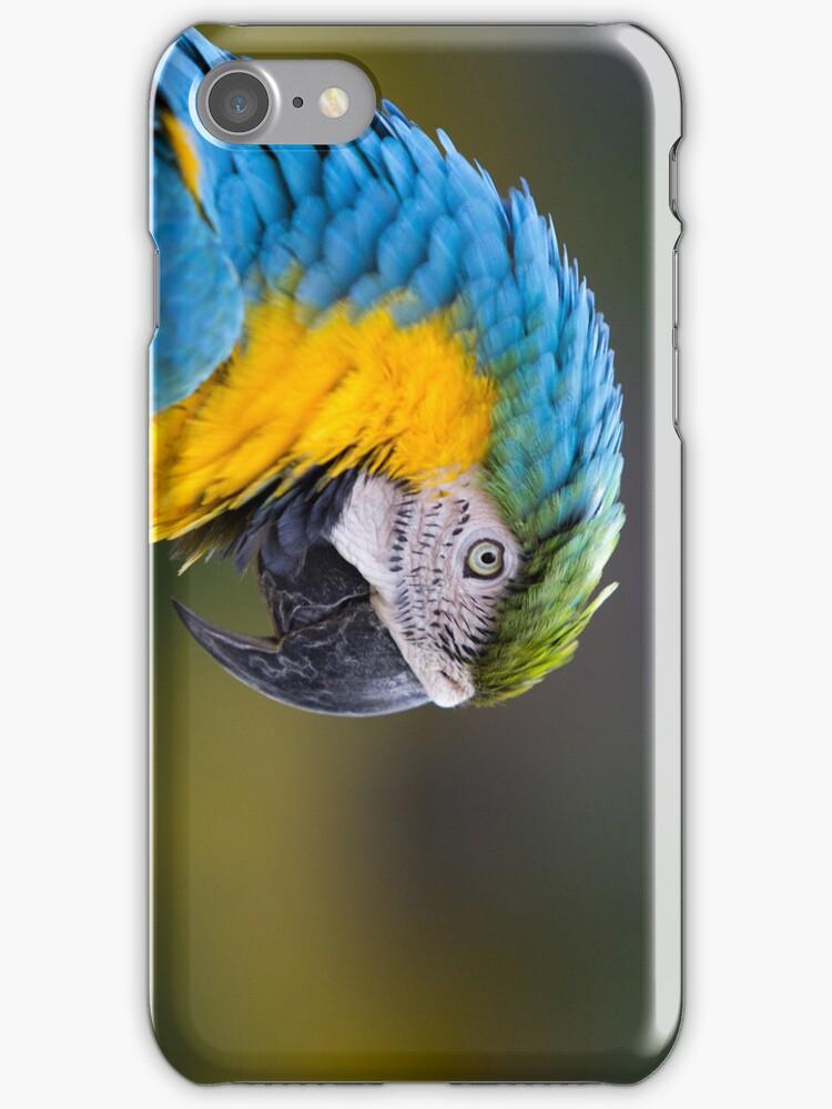 Macaw by JosePracek