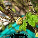 Yellow Grove Snail VRS2 by vivendulies