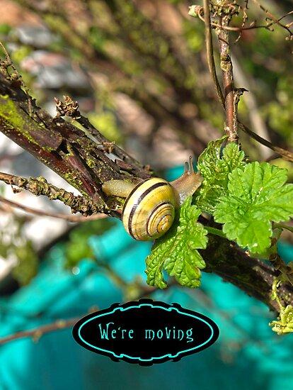 Yellow Grove Snail VRS2 by vivendulies