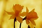 Promise Of Spring by NatureGreeting Cards ©ccwri