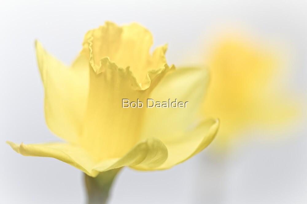 Bashful blooming... by Bob Daalder