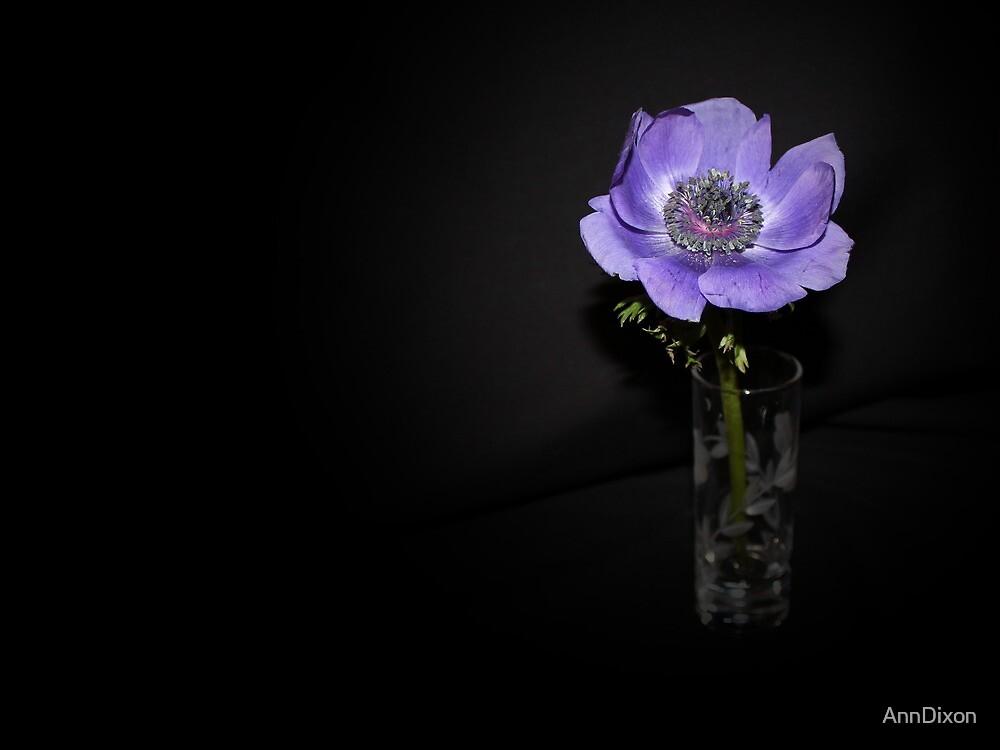 Purple Anemone by AnnDixon