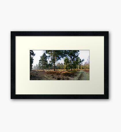 2nd City Widerness Framed Print