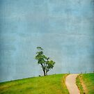 One Tree Hill by photograham