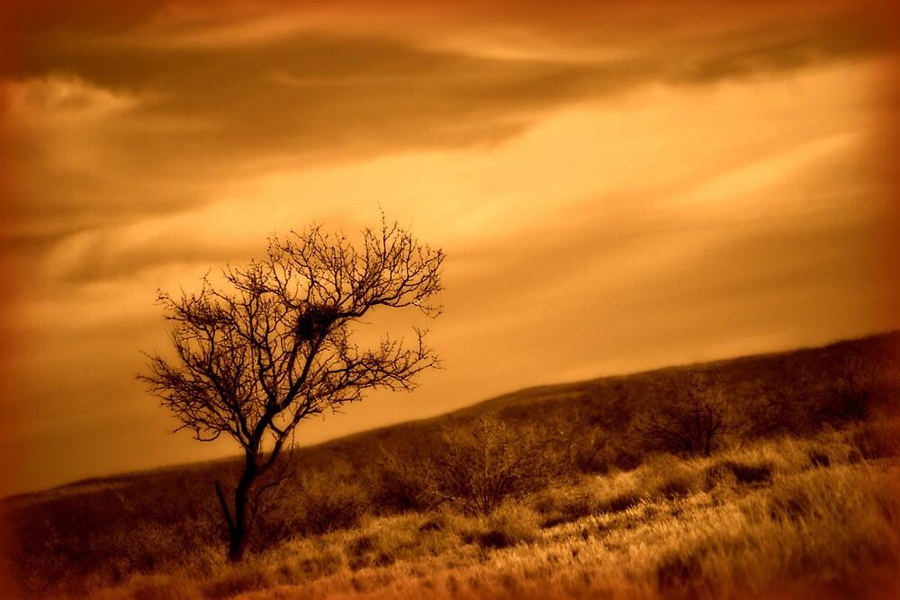 A Desert Home by Sheryl Gerhard