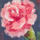 Carnation by julianamotzko